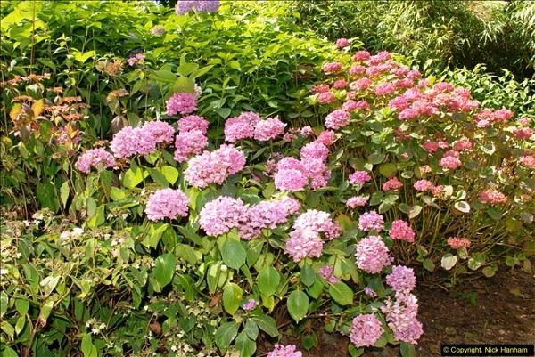 2014-08-22 Abbotsbury Tropical Gardens, Abbotsbury, Dorset.  (83)