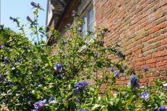 2014-08-11 The Vyne (NT) Basingstoke, Hampshire.  (19)
