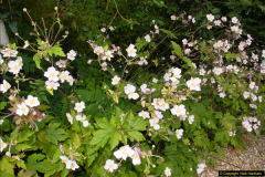 2014-08-19 Hillier Gardens, Romsey, Hampshire.  (105)