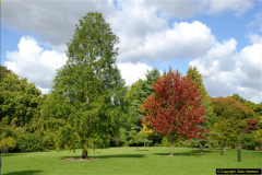 2014-08-19 Hillier Gardens, Romsey, Hampshire.  (13)