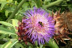 2014-08-19 Hillier Gardens, Romsey, Hampshire.  (131)