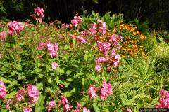 2014-08-19 Hillier Gardens, Romsey, Hampshire.  (134)