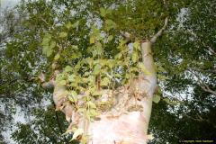 2014-08-19 Hillier Gardens, Romsey, Hampshire.  (156)