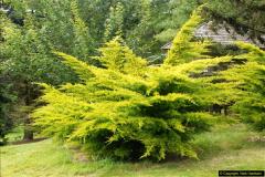 2014-08-19 Hillier Gardens, Romsey, Hampshire.  (158)