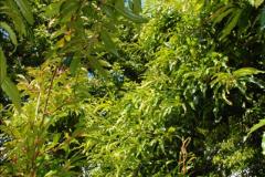 2014-08-19 Hillier Gardens, Romsey, Hampshire.  (174)