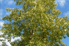 2014-08-19 Hillier Gardens, Romsey, Hampshire.  (179)