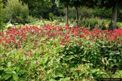 2014-08-19 Hillier Gardens, Romsey, Hampshire.  (18)