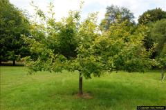 2014-08-19 Hillier Gardens, Romsey, Hampshire.  (187)