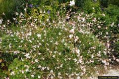 2014-08-19 Hillier Gardens, Romsey, Hampshire.  (20)