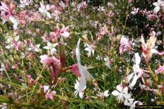 2014-08-19 Hillier Gardens, Romsey, Hampshire.  (26)