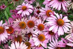 2014-08-19 Hillier Gardens, Romsey, Hampshire.  (29)