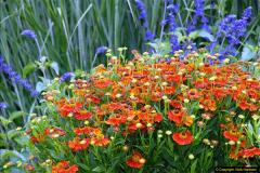 2014-08-19 Hillier Gardens, Romsey, Hampshire.  (39)