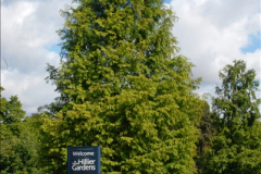 2014-08-19 Hillier Gardens, Romsey, Hampshire.  (4)