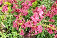 2014-08-19 Hillier Gardens, Romsey, Hampshire.  (44)