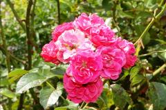 2014-08-19 Hillier Gardens, Romsey, Hampshire.  (48)