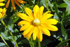 2014-08-19 Hillier Gardens, Romsey, Hampshire.  (50)