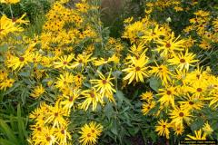 2014-08-19 Hillier Gardens, Romsey, Hampshire.  (58)