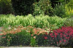 2014-08-19 Hillier Gardens, Romsey, Hampshire.  (59)