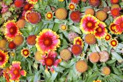 2014-08-19 Hillier Gardens, Romsey, Hampshire.  (62)