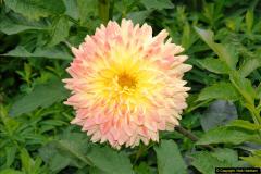 2014-08-19 Hillier Gardens, Romsey, Hampshire.  (64)
