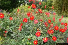 2014-08-19 Hillier Gardens, Romsey, Hampshire.  (66)