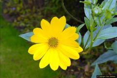 2014-08-19 Hillier Gardens, Romsey, Hampshire.  (71)