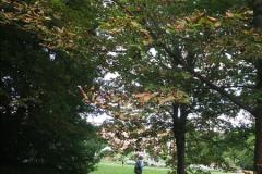 2012-08-17 Hughenden ( Disraeli's House), High Wycombe, Buckinghamshire.  (20)