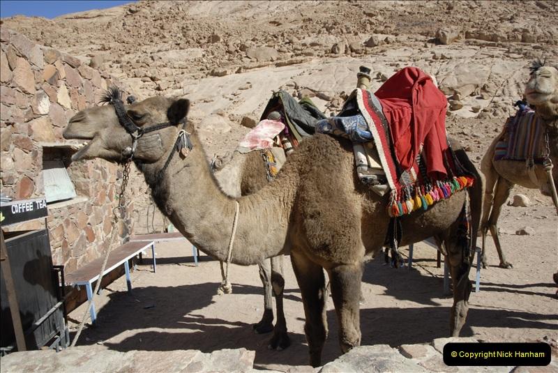 2011-11-11 Sharm El Sheikh & St. Catherine's Monastery, Egypt.   (35)