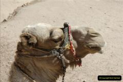 2011-11-11 Sharm El Sheikh & St. Catherine's Monastery, Egypt.   (40)