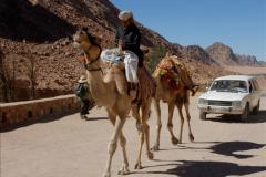 2011-11-11 Sharm El Sheikh & St. Catherine's Monastery, Egypt.   (41)