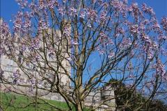 2017-04-06 Arundel Castle, Arundel, Sussex.  (15)015