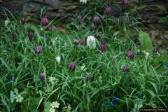 2017-04-06 Arundel Castle, Arundel, Sussex.  (183)192
