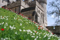 2017-04-06 Arundel Castle, Arundel, Sussex.  (193)202