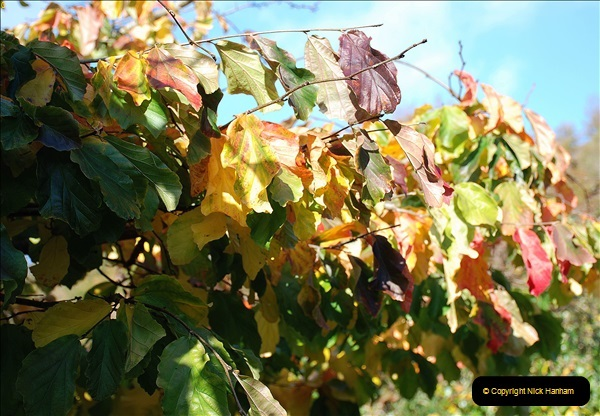 2018-10-21 Dyrham Park (NT) Autumn Colour. Near Bath, Somerset.  (13)013