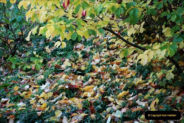 2018-10-21 Dyrham Park (NT) Autumn Colour. Near Bath, Somerset.  (25)025