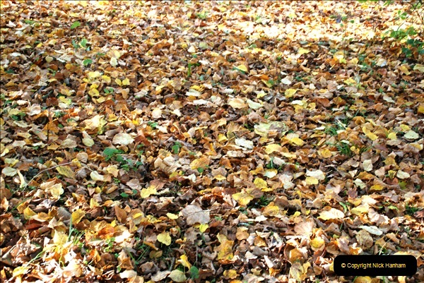 2018-10-21 Dyrham Park (NT) Autumn Colour. Near Bath, Somerset.  (27)027