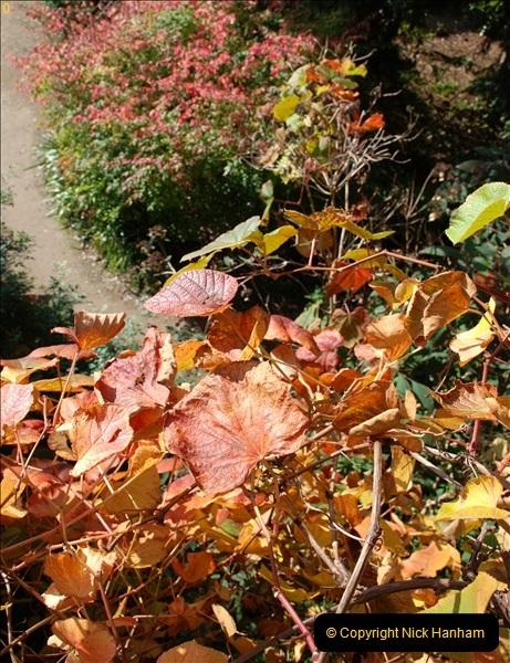 2018-10-21 Dyrham Park (NT) Autumn Colour. Near Bath, Somerset.  (34)034
