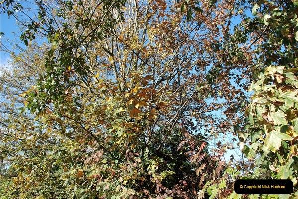 2018-10-21 Dyrham Park (NT) Autumn Colour. Near Bath, Somerset.  (47)047