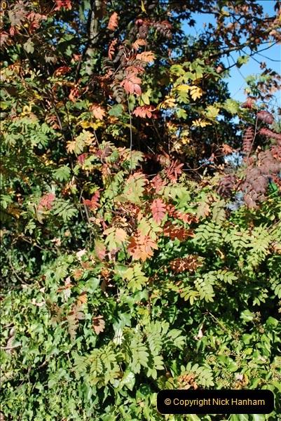 2018-10-21 Dyrham Park (NT) Autumn Colour. Near Bath, Somerset.  (48)048