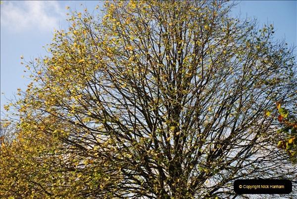 2018-10-21 Dyrham Park (NT) Autumn Colour. Near Bath, Somerset.  (55)055