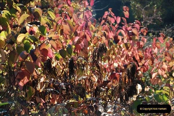 2018-10-21 Dyrham Park (NT) Autumn Colour. Near Bath, Somerset.  (15)015