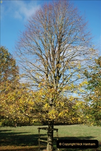 2018-10-21 Dyrham Park (NT) Autumn Colour. Near Bath, Somerset.  (58)058