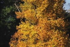 2018-10-21 Dyrham Park (NT) Autumn Colour. Near Bath, Somerset.  (12)012