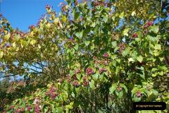 2018-10-21 Dyrham Park (NT) Autumn Colour. Near Bath, Somerset.  (14)014