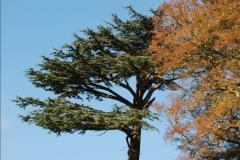 2018-10-21 Dyrham Park (NT) Autumn Colour. Near Bath, Somerset.  (4)004
