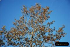 2018-10-21 Dyrham Park (NT) Autumn Colour. Near Bath, Somerset.  (49)049