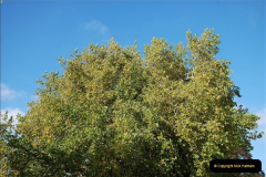 2018-10-21 Dyrham Park (NT) Autumn Colour. Near Bath, Somerset.  (51)051