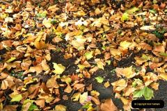 2018-10-21 Dyrham Park (NT) Autumn Colour. Near Bath, Somerset.  (52)052