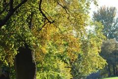 2018-10-21 Dyrham Park (NT) Autumn Colour. Near Bath, Somerset.  (53)053