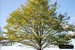 2018-10-21 Dyrham Park (NT) Autumn Colour. Near Bath, Somerset.  (54)054